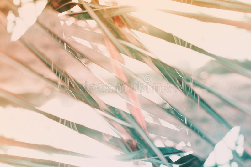 El modelo geométrico natural de la palma del arte de la decoración entonó imágenes de archivo libres de regalías