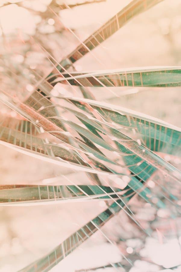 El modelo geométrico natural de la palma del arte de la decoración entonó foto de archivo libre de regalías