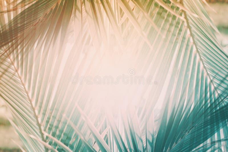 El modelo geométrico natural de la palma del arte de la decoración entonó libre illustration