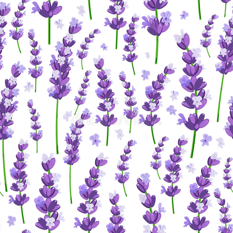 El modelo inconsútil de la lavanda violeta de Provence florece en un fondo blanco Ilustración del vector libre illustration