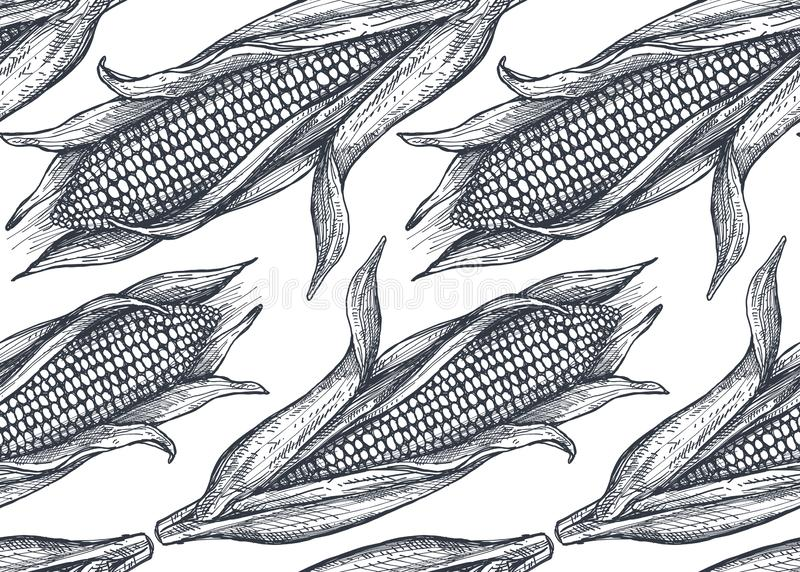 El modelo inconsútil del vector con la mano dibujada bosquejó maíz libre illustration