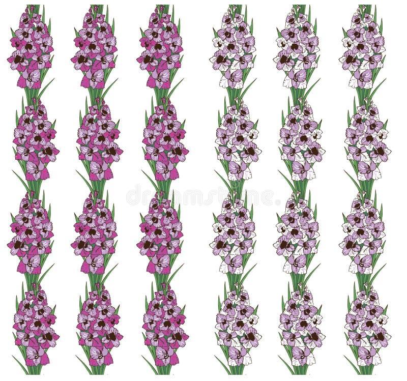 El modelo inconsútil florece el gladiolo en el fondo blanco ilustración del vector