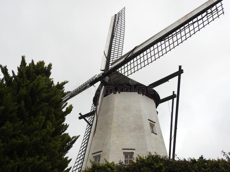 El molino blanco - St Niklaas - Bélgica imagen de archivo