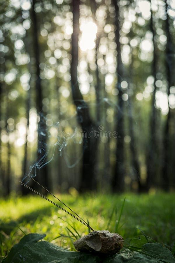 El momento para la meditación, vertical fotografía de archivo libre de regalías