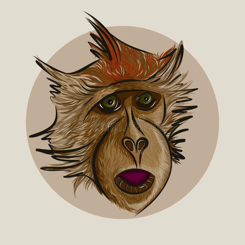 El mono fotografía de archivo libre de regalías
