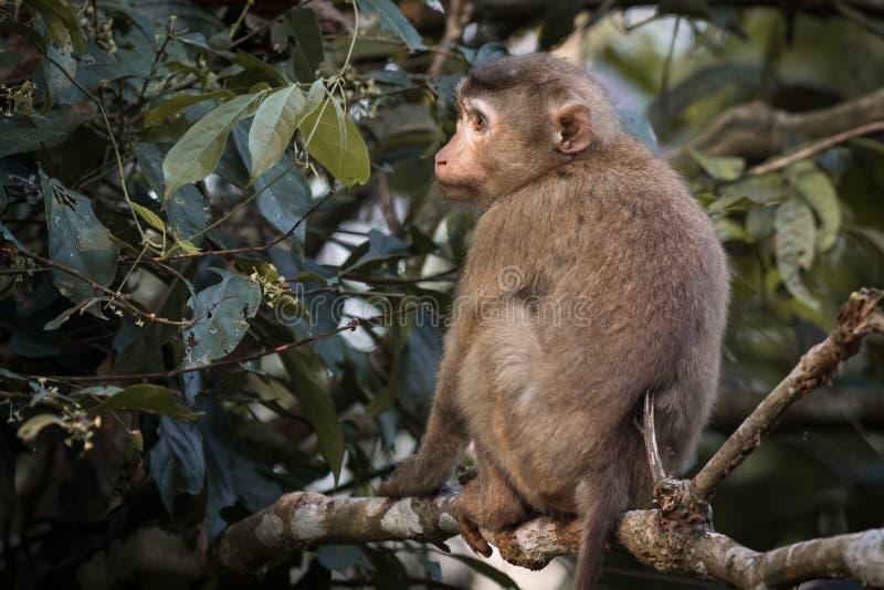 El mono imagen de archivo
