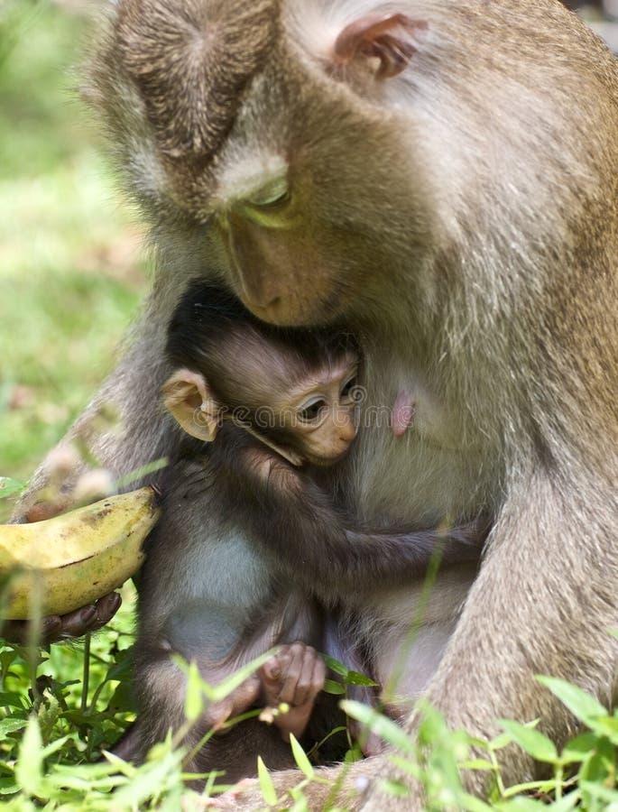 El mono del bebé abraza a la mama imagen de archivo