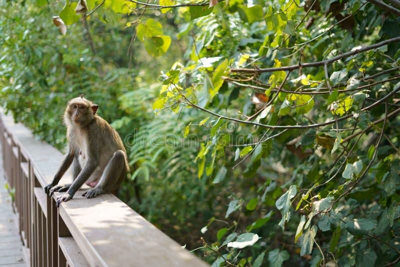 El mono está buscando algo fotografía de archivo libre de regalías