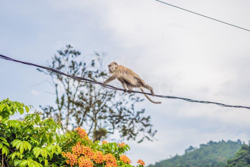 El mono está intentando caminar en los alambres cuidadosamente imagenes de archivo