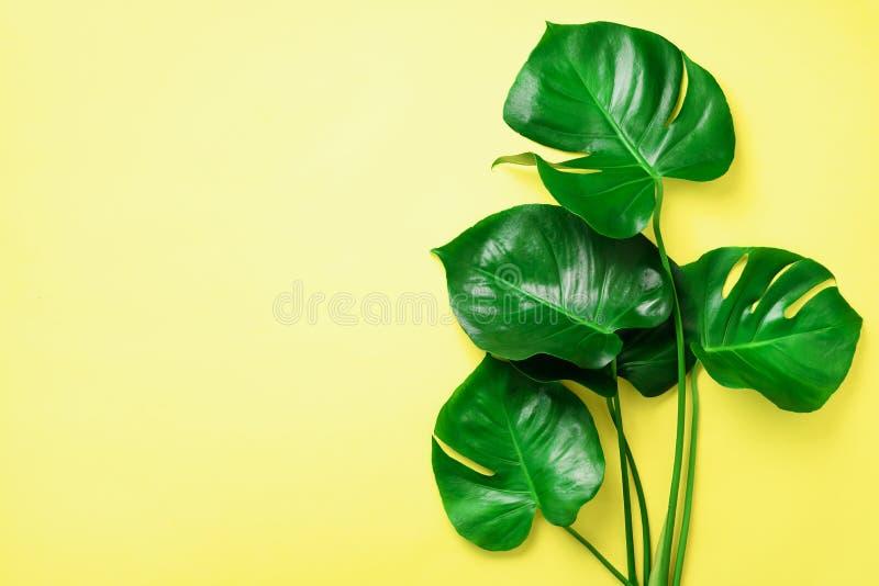 El monstera verde se va en fondo amarillo con el espacio de la copia Visión superior Diseño mínimo Planta exótica Verano creativo imagen de archivo