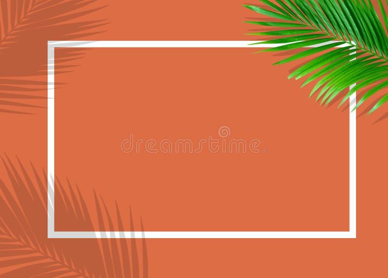 El monstera verde tropical deja la naturaleza en fondo anaranjado con el marco fotos de archivo libres de regalías
