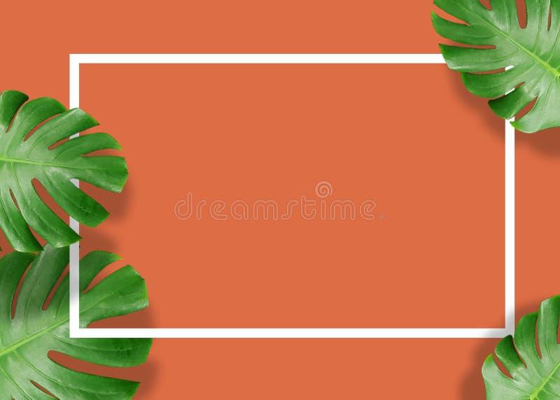 El monstera verde tropical deja la naturaleza en fondo anaranjado con el marco fotografía de archivo