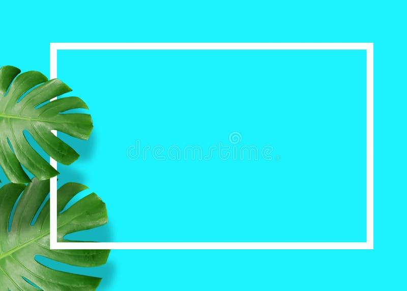 El monstera verde tropical deja la naturaleza en fondo azul con el marco imagen de archivo libre de regalías