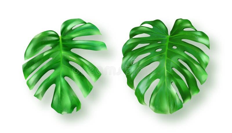 El monstera verde tropical se va en el fondo blanco stock de ilustración
