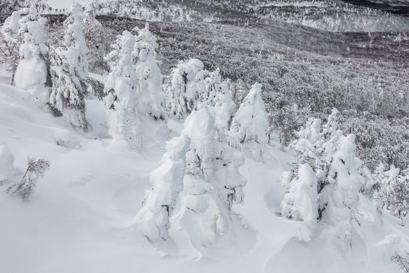 El monstruo de la nieve o la nieve heló árboles en el soporte Hakkoda imagen de archivo libre de regalías