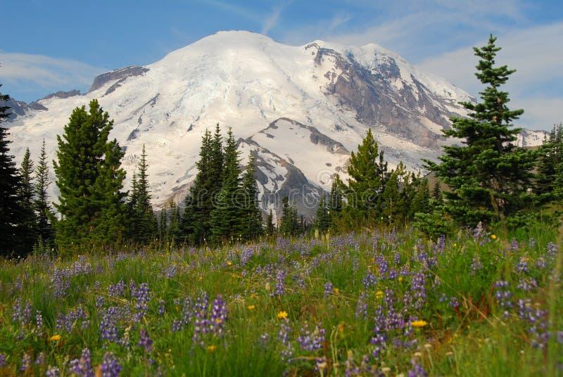 El Monte Rainier y prado foto de archivo libre de regalías