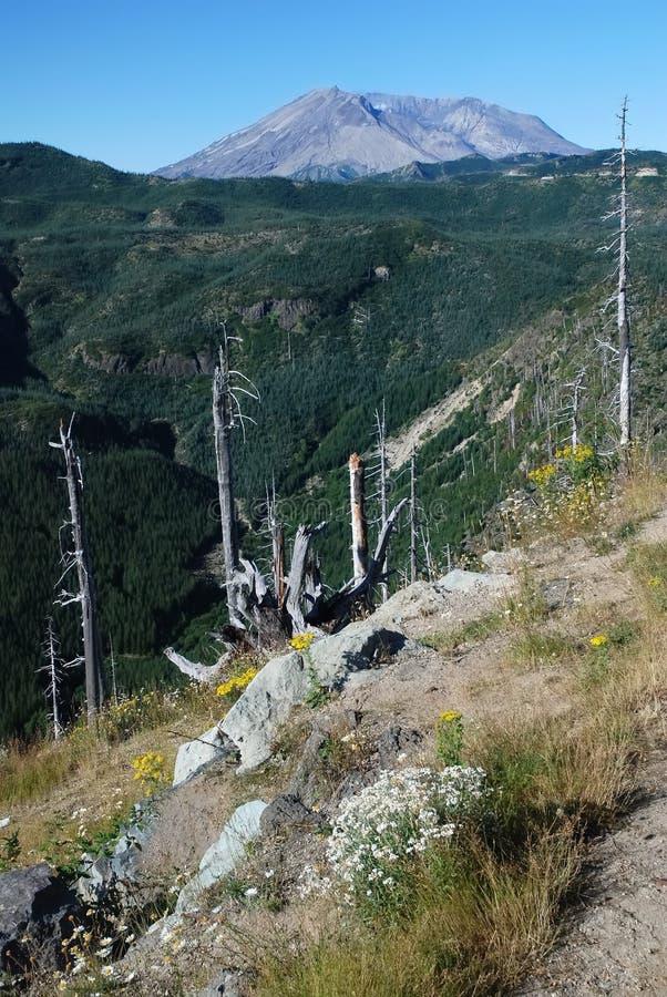 El Monte Saint Helens, Washington, los E.E.U.U. foto de archivo libre de regalías