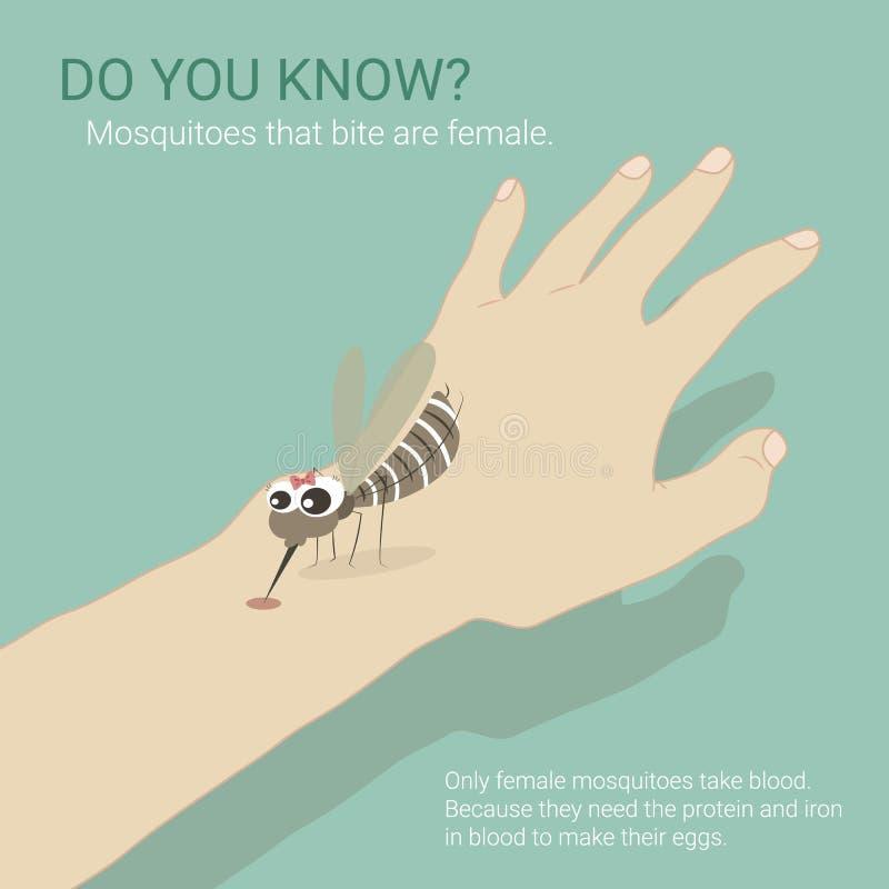 El mosquito femenino toma sangre libre illustration