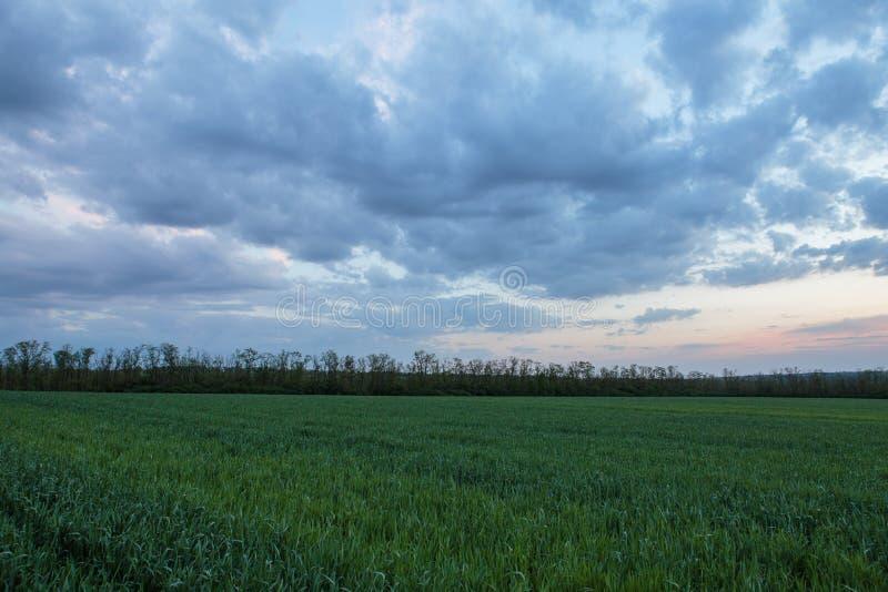El movimiento de las nubes tormentosas sobre los campos del whea del invierno fotos de archivo
