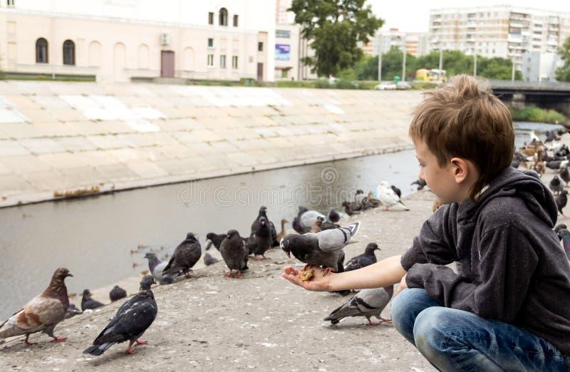El muchacho alimenta la paloma insolente con un pedazo de pan el suyo fotografía de archivo