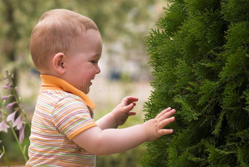 El muchacho de Litle está jugando con el árbol de abeto fotografía de archivo libre de regalías