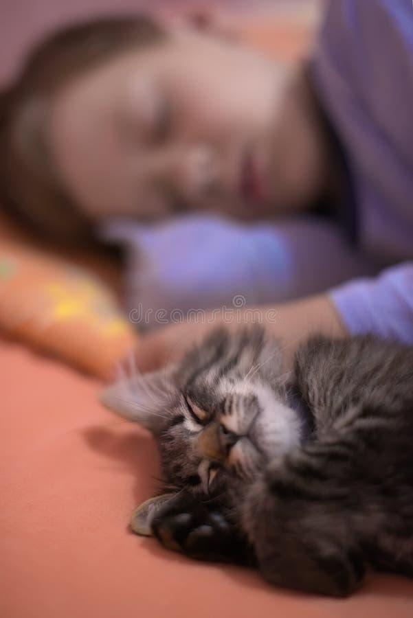 El muchacho duerme con un gatito imagen de archivo