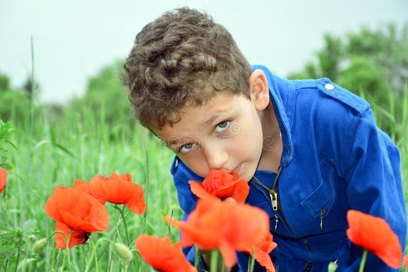 El muchacho en campo del verano se coloca en amapolas imagen de archivo