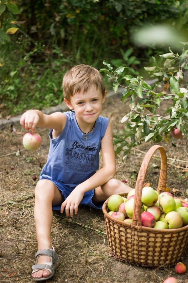 El muchacho en el jardín que se sienta con una cesta por completo de manzanas foto de archivo
