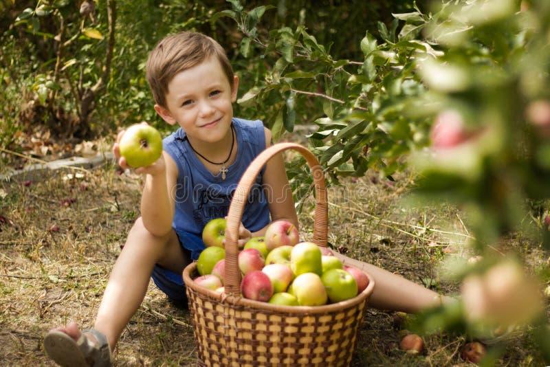 El muchacho en el jardín que se sienta con una cesta por completo de manzanas fotos de archivo libres de regalías