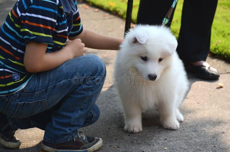 El muchacho feliz sonriente está jugando con un perro casero lindo, un perrito japonés blanco del perro de Pomerania, en la calle fotos de archivo libres de regalías
