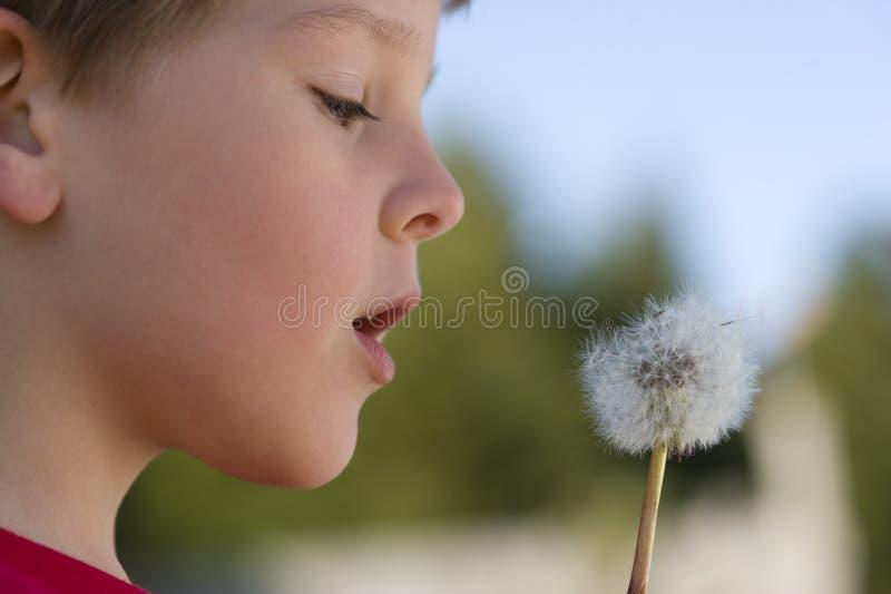 El muchacho hace un deseo en un diente de león fotografía de archivo