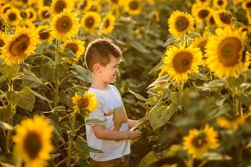 El muchacho hermoso en el campo solar del verano fotografía de archivo