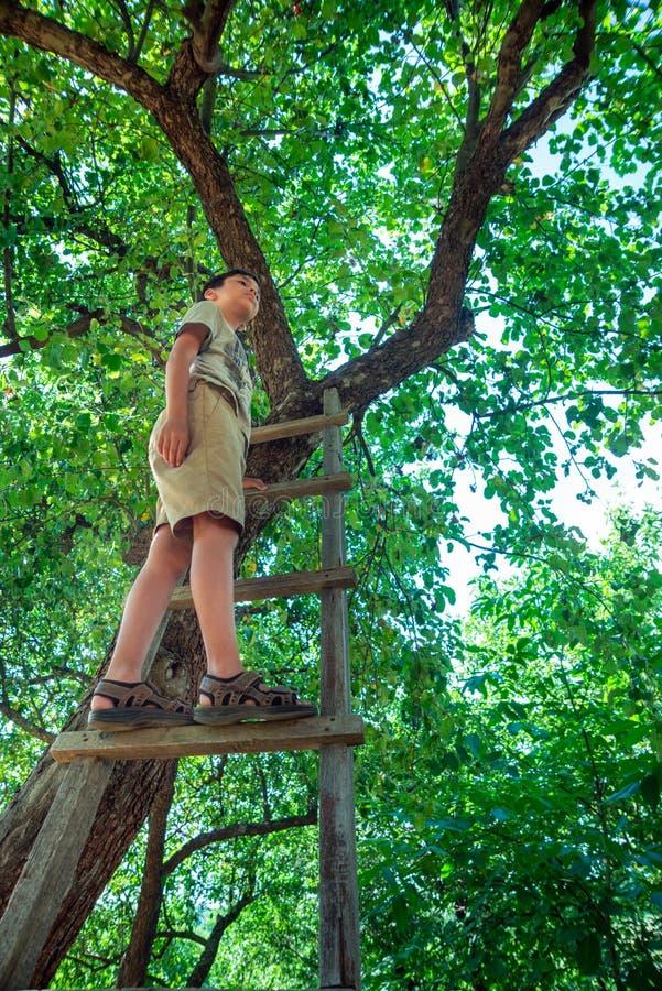 El muchacho se coloca encima de una escalera de mano de madera, inclinándose contra un árbol en un jardín o un parque fotos de archivo libres de regalías