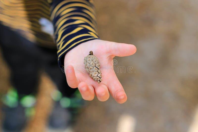 El muchacho sostiene un cono del pino foto de archivo