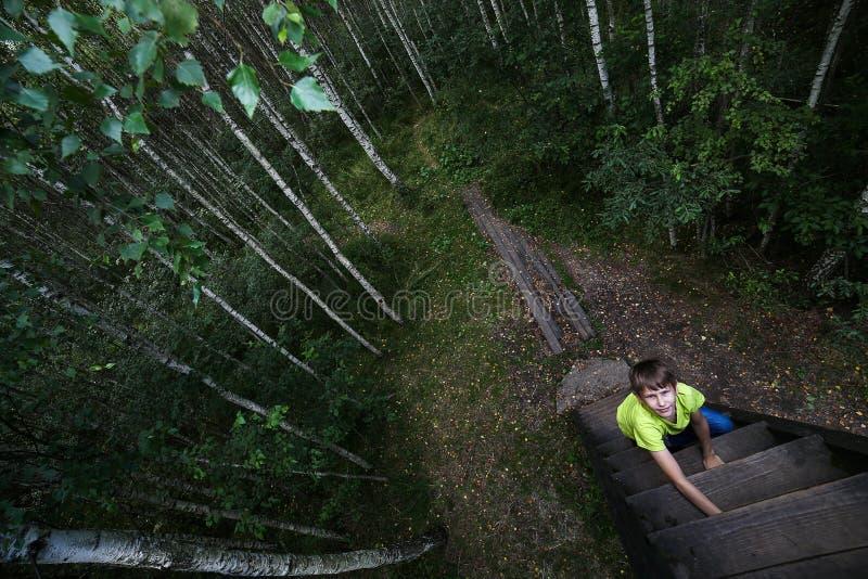 El muchacho sube las escaleras al árbol Bosque del abedul, día de verano Aventura interesante foto de archivo