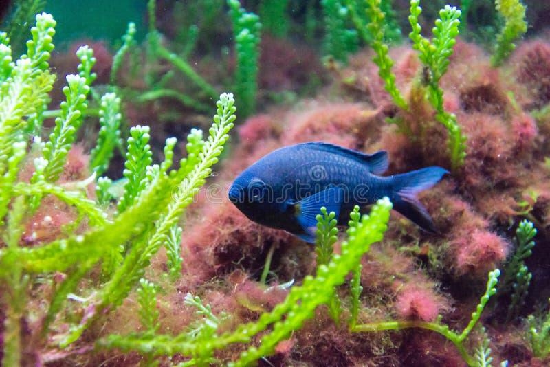 El mundo subacuático foto de archivo libre de regalías