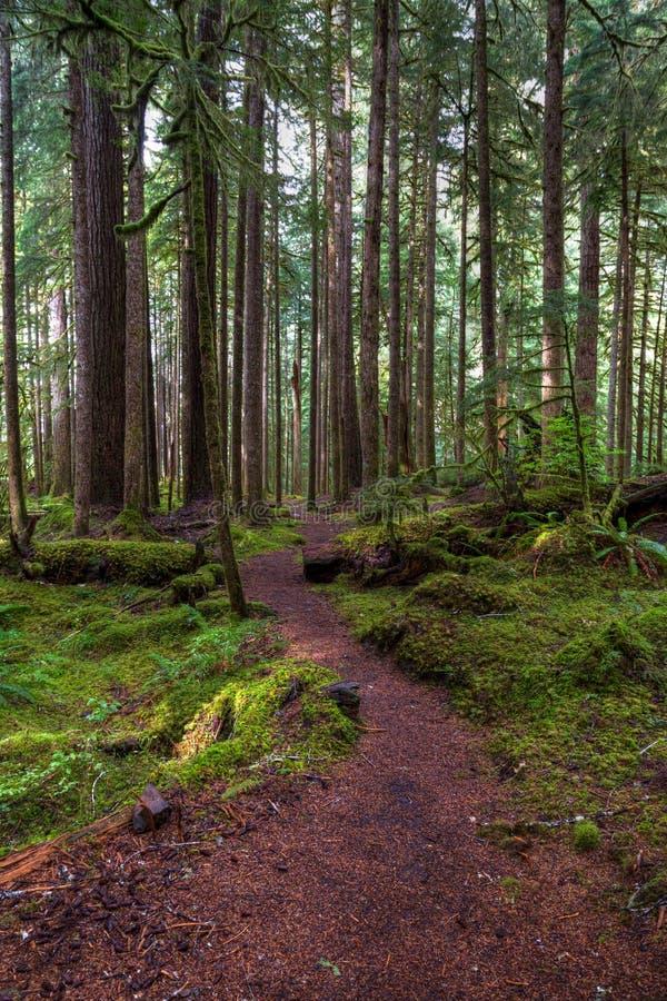 El musgo alto cubrió árboles con el musgo de color verde oscuro en los lados de un rastro que enrollaba hacia adelante y hacia at foto de archivo