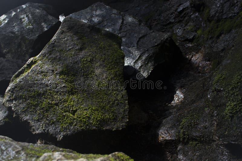 El musgo cubrió la roca imágenes de archivo libres de regalías