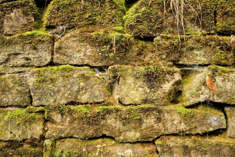 El musgo cubrió los ladrillos de piedra foto de archivo libre de regalías