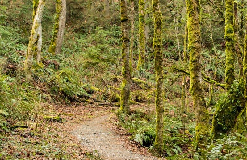 El musgo de la selva tropical cubrió árboles fotos de archivo