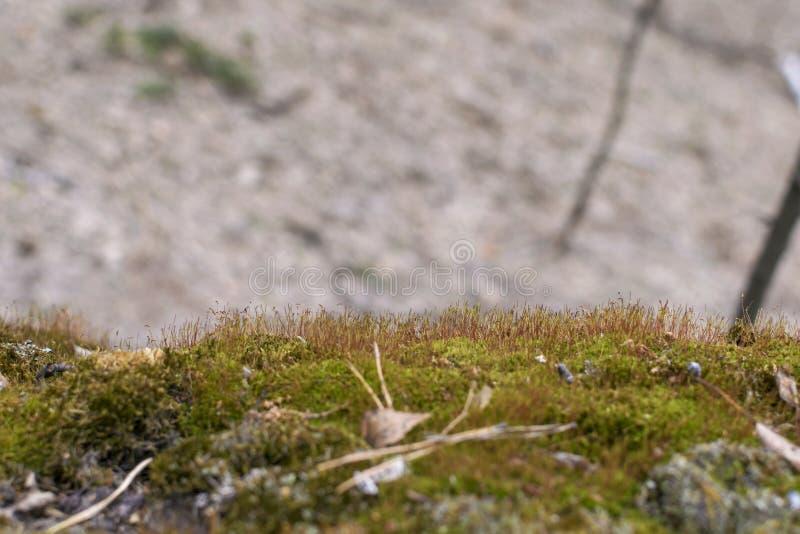 El musgo verde crece en el ?rbol Vegetaci?n en el bosque h?medo foto de archivo libre de regalías