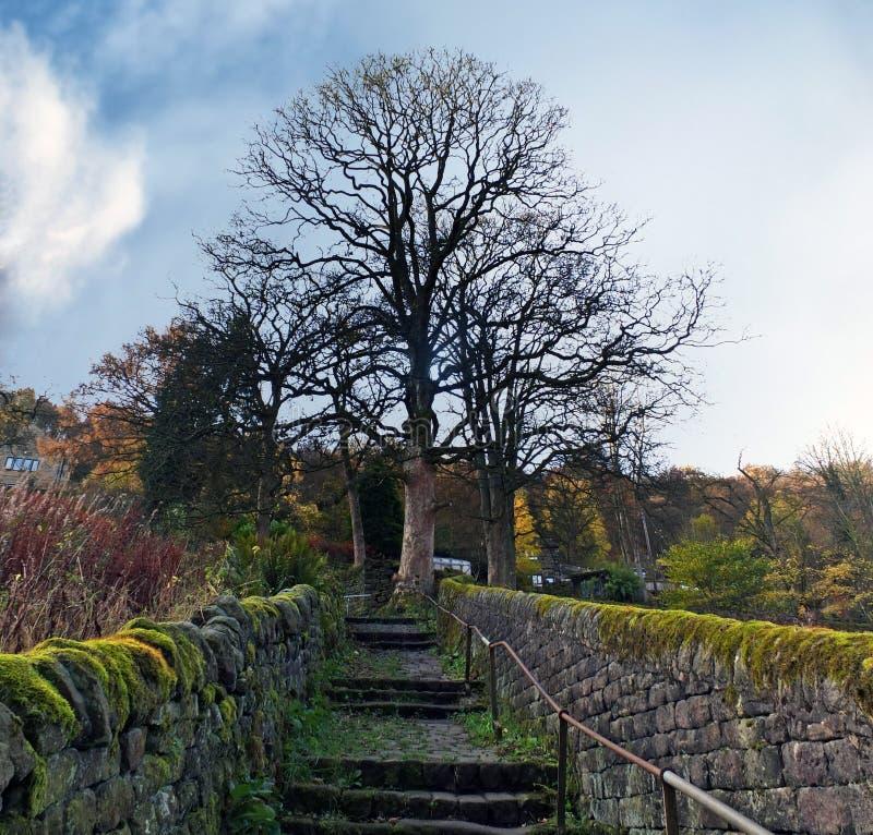 El musgo viejo escarpado cubrió la escalera de piedra encima de una colina escarpada en un arbolado rural que fijaba con un árbol fotografía de archivo libre de regalías