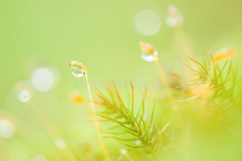 El musgo y el liquen con mañana que relucir rocían en estación de primavera imagen de archivo