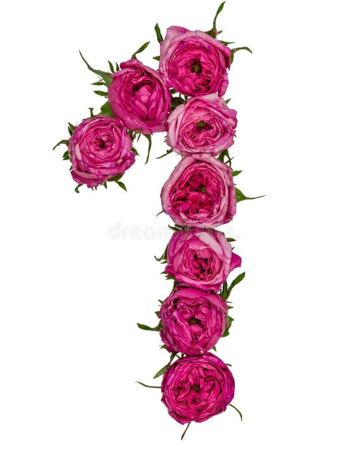 El número árabe 1, uno, de las flores rojas de subió, aislado en whi fotografía de archivo libre de regalías