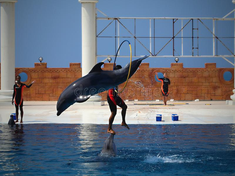 El nadar con los delf?nes foto de archivo libre de regalías