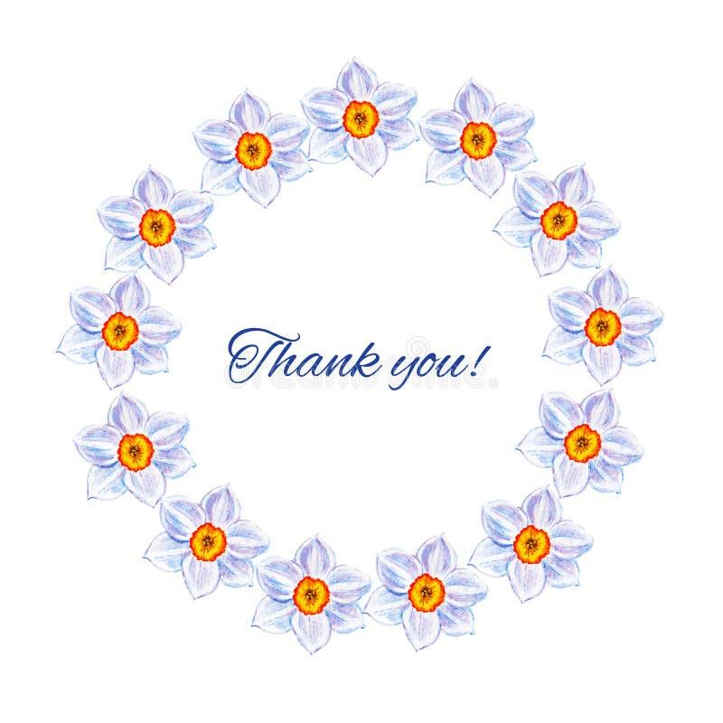 El narciso florece el ejemplo dibujado mano de la pintura del vector de la acuarela, marco redondo floral, herbario decorativo co ilustración del vector