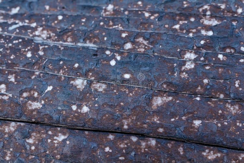 El negro carbonizó textura de madera quemada del fondo del árbol fotografía de archivo libre de regalías