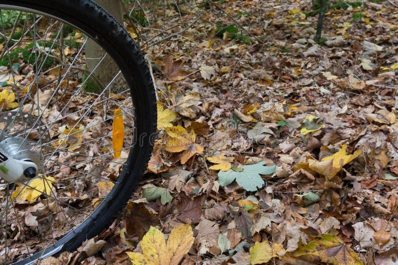 El neumático negro de una bici de montaña que rueda sobre las hojas amarillas fotografía de archivo libre de regalías