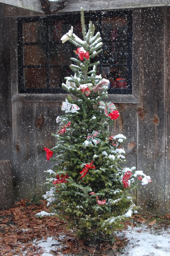 El nevar al aire libre del árbol de navidad imágenes de archivo libres de regalías