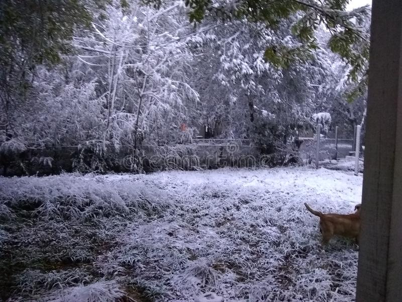 El nevar en el tx de Corpus Christi imagen de archivo libre de regalías